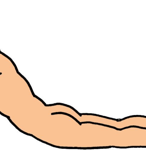 体幹伸展運動 (背中反らし)
